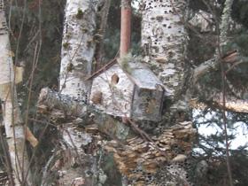 Birch Bark House